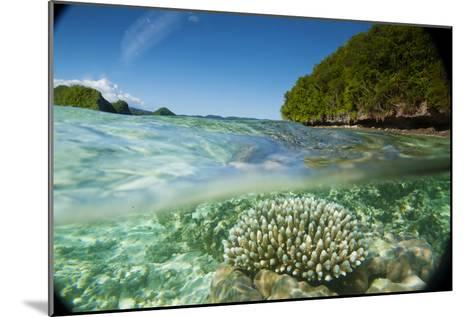 The Sea Floor of Palau's Rock Islands-Stephen Alvarez-Mounted Photographic Print
