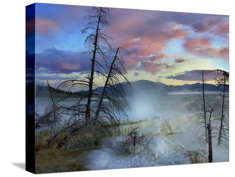 Steam Rising From Travertine Formations, Minerva Terrace, Mammoth Hot Springs, Yellowstone-Tim Fitzharris-Stretched Canvas Print
