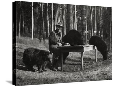 Superintendent Albright of Yellowstone Park Sits with Three Bears-U.S.National Park Service-Stretched Canvas Print