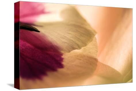 Close Up of a Pansy-Vickie Lewis-Stretched Canvas Print