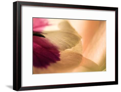 Close Up of a Pansy-Vickie Lewis-Framed Art Print