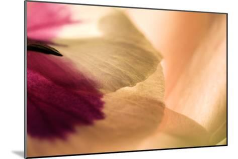 Close Up of a Pansy-Vickie Lewis-Mounted Photographic Print