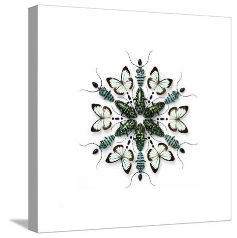 Elegans Prism-Christopher Marley-Stretched Canvas Print