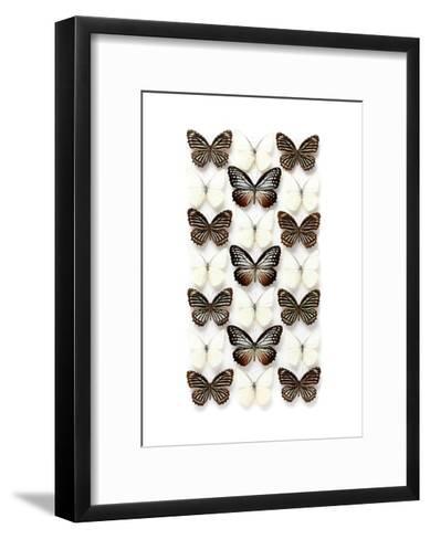 Elymnias-Christopher Marley-Framed Art Print
