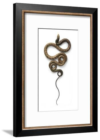 Cobra-Christopher Marley-Framed Art Print