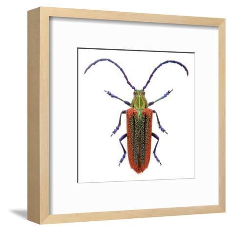 Oxypeltus Quadrispinosis-Christopher Marley-Framed Art Print