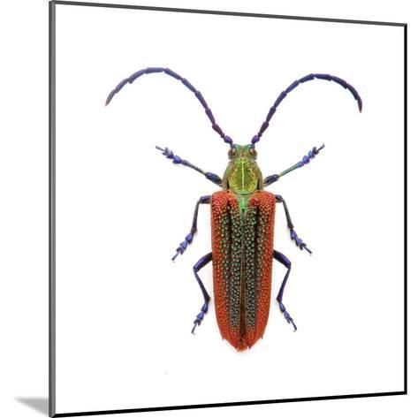 Oxypeltus Quadrispinosis-Christopher Marley-Mounted Photographic Print