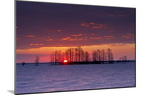 A Colorful Sunrise Over Silhouetted Cypress Trees in Lake Mattamuskeet-Robbie George-Mounted Photographic Print
