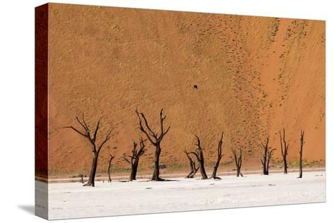 Camel Thorn Trees Against Red Sand Dunes in the Sossusvlei-Sergio Pitamitz-Stretched Canvas Print