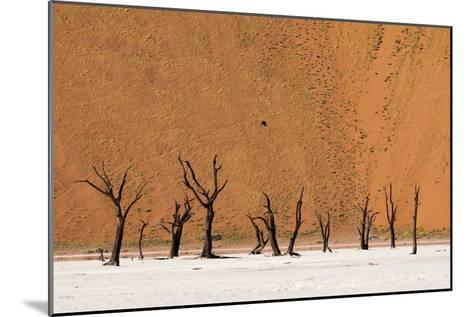 Camel Thorn Trees Against Red Sand Dunes in the Sossusvlei-Sergio Pitamitz-Mounted Photographic Print