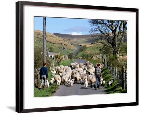 Irish Spring Lambs-Chris Hill-Framed Art Print