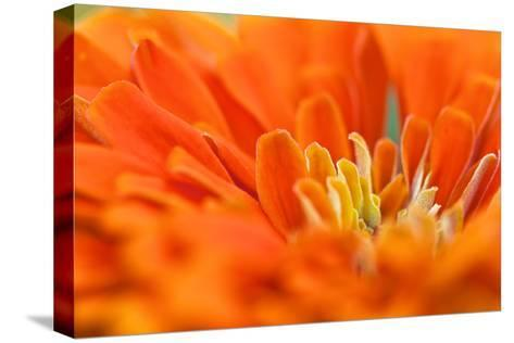 Extreme Close Up of An Orange Chrysanthemum Flower-Vickie Lewis-Stretched Canvas Print