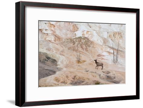 An Elk Cow at Canary Spring-Tom Murphy-Framed Art Print
