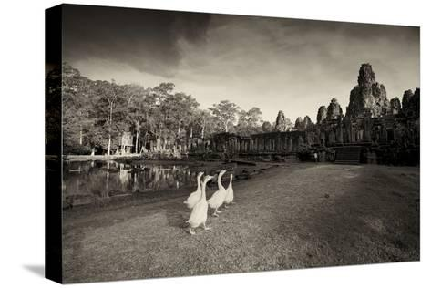 Geese Walk on the Grounds of the 12th Century Temple, Bayon-Jim Richardson-Stretched Canvas Print