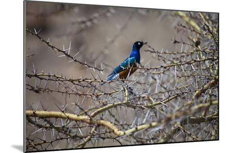 A Bird Perched in a Thicket of Thorny Branches-Aaron Huey-Mounted Photographic Print