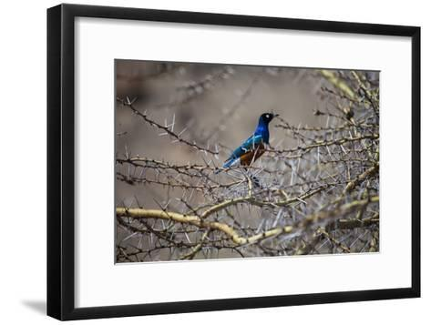 A Bird Perched in a Thicket of Thorny Branches-Aaron Huey-Framed Art Print