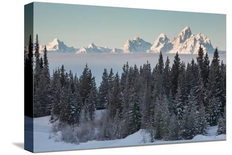 A Winter Forest Scene with the Teton Range in the Distance-Greg Winston-Stretched Canvas Print
