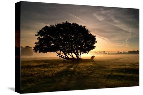 A Solitary Fallen Live Tree Under a Dramatic Sky on a Misty Morning-Alex Saberi-Stretched Canvas Print