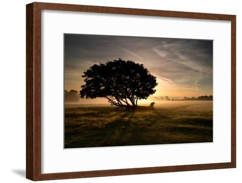 A Solitary Fallen Live Tree Under a Dramatic Sky on a Misty Morning-Alex Saberi-Framed Art Print