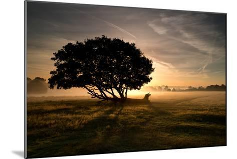 A Solitary Fallen Live Tree Under a Dramatic Sky on a Misty Morning-Alex Saberi-Mounted Photographic Print