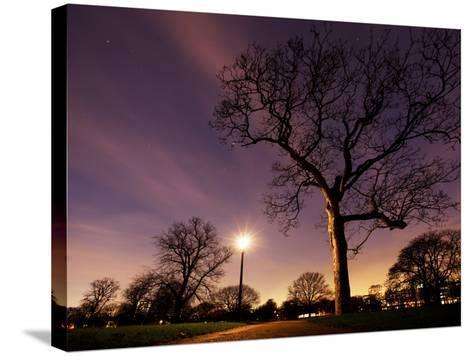 Nightime in Hyde Park, London-Alex Saberi-Stretched Canvas Print