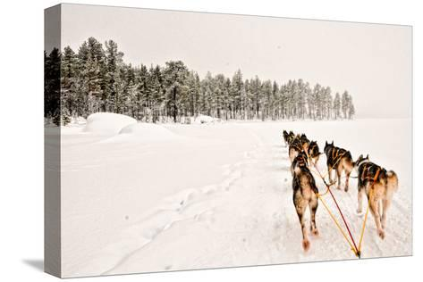 Dog Sledding Across Frozen Lakes in Jokkmokk, Swedish Lapland-Lola Akinmade Akerstrom-Stretched Canvas Print