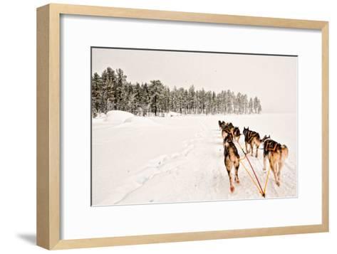 Dog Sledding Across Frozen Lakes in Jokkmokk, Swedish Lapland-Lola Akinmade Akerstrom-Framed Art Print