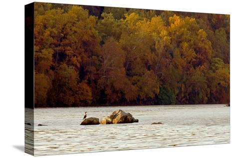 A Duck Rests on One of the Three Sisters Islands in the Potomac-Rex A. Stucky-Stretched Canvas Print