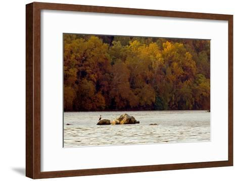 A Duck Rests on One of the Three Sisters Islands in the Potomac-Rex A. Stucky-Framed Art Print