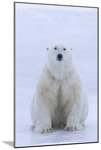 A Portrait of a Blood Stained Male Polar Bear Sitting on Sea Ice-Matthias Breiter-Mounted Photographic Print
