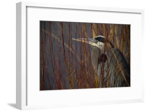 Portrait of a Blue Heron at a Pond-Raul Touzon-Framed Art Print