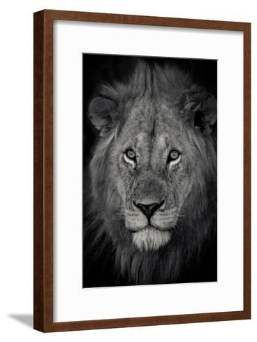 An Adult Lion Sits and Waits for Night to Fall in the Fading Light-Robin Moore-Framed Art Print
