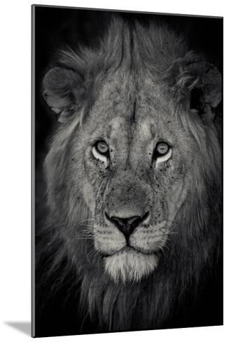 An Adult Lion Sits and Waits for Night to Fall in the Fading Light-Robin Moore-Mounted Photographic Print