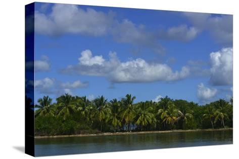 Coconut Palms Along the Shore of Samana Peninsula-Raul Touzon-Stretched Canvas Print