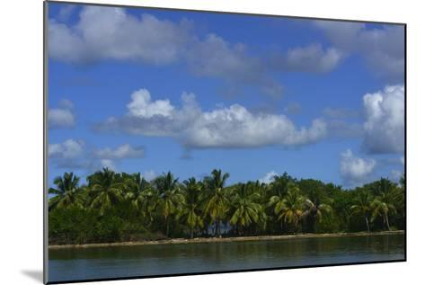 Coconut Palms Along the Shore of Samana Peninsula-Raul Touzon-Mounted Photographic Print