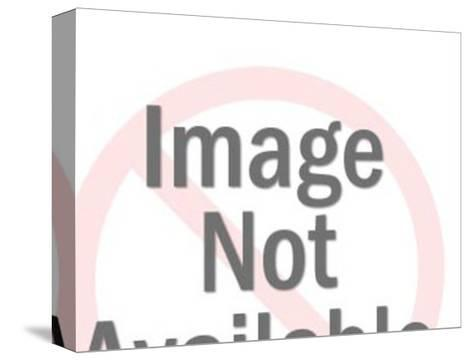 NO IMAGE-Pop Ink - CSA Images-Stretched Canvas Print