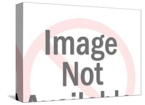 Bulldog-Pop Ink - CSA Images-Stretched Canvas Print