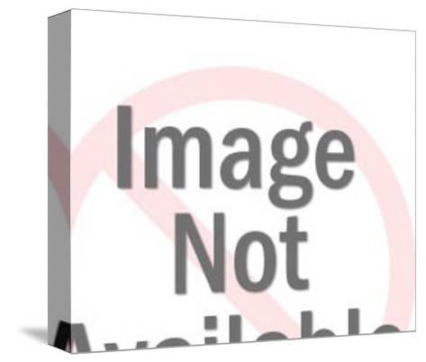 Dalmatian Dog-Pop Ink - CSA Images-Stretched Canvas Print
