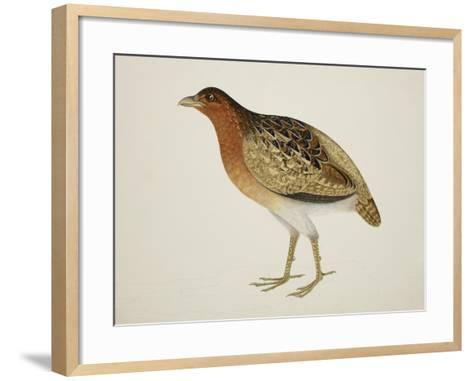 Long-Billed Partridge-J. Briois-Framed Art Print