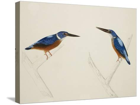 Deep Blue Kingfisher-J. Briois-Stretched Canvas Print