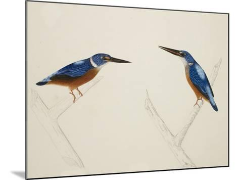 Deep Blue Kingfisher-J. Briois-Mounted Giclee Print