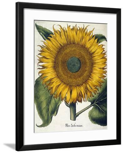 Sunflower--Framed Art Print