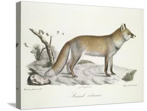 A Fox-Werner-Stretched Canvas Print