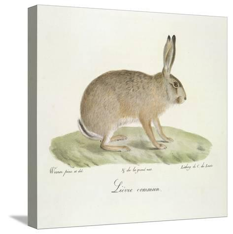A Common Hare-Werner-Stretched Canvas Print
