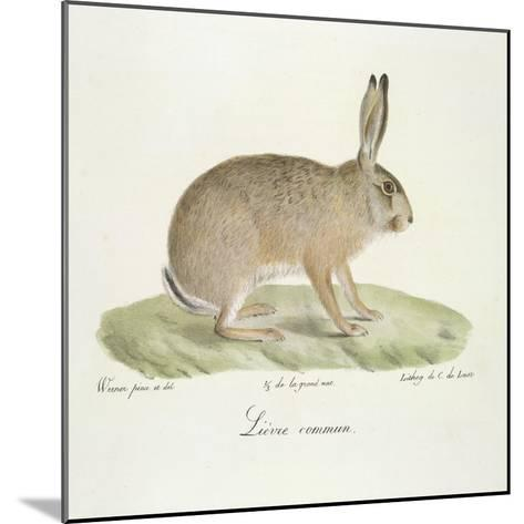 A Common Hare-Werner-Mounted Giclee Print