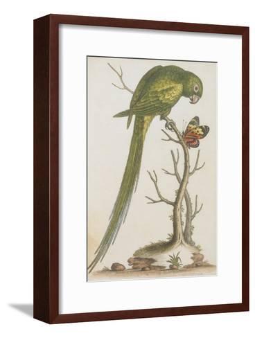 Parrakeet--Framed Art Print