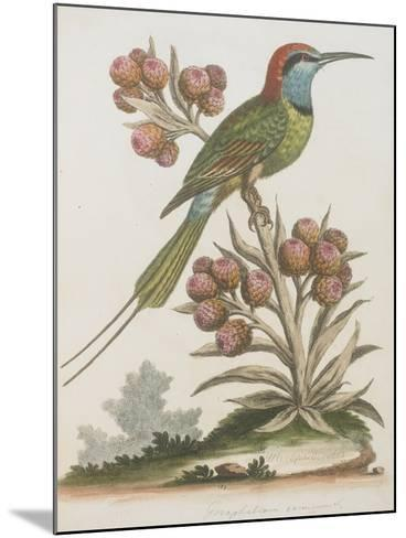 Indian Bee-eater--Mounted Giclee Print