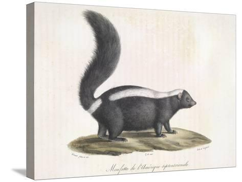 Skunk--Stretched Canvas Print