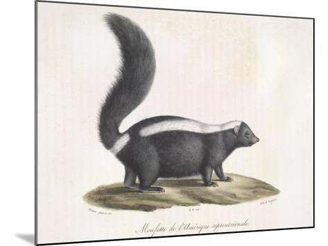 Skunk--Mounted Giclee Print