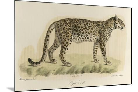 A Male Leopard--Mounted Giclee Print